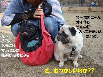 DSC04320_20110828174059.jpg