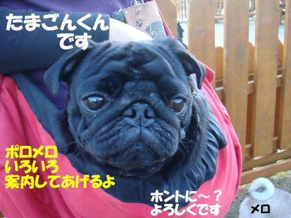 DSC05019_20110828175941.jpg