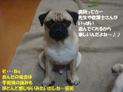 DSC07045_20110824184921.jpg