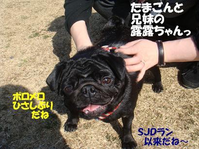 DSC08344_20110828195755.jpg