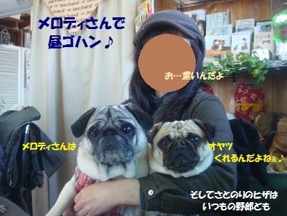 DSC09052_20130301043702.jpg