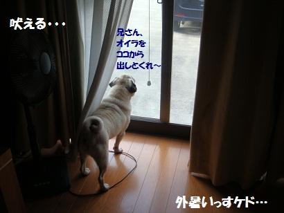 DSC09276_20110818182557.jpg