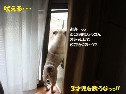 DSC09278_20110818182557.jpg