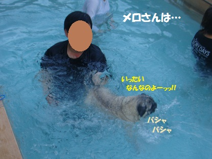DSC09504_20130317165610.jpg