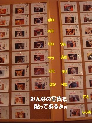 DSC09593_20130317221240.jpg