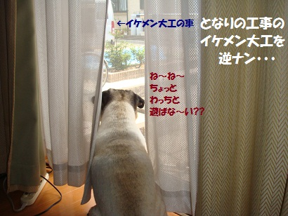 DSC09634_20110818175000.jpg