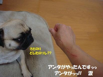 DSC09663.jpg