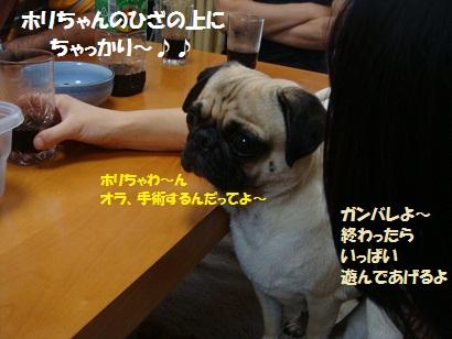 DSC09802_20110824185744.jpg