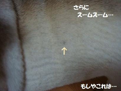 DSC09839_20110824173539.jpg