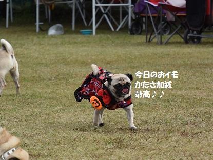DSC_1690_R.jpg