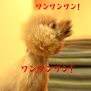 2010904_028.jpg