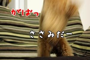 20120327-079.jpg