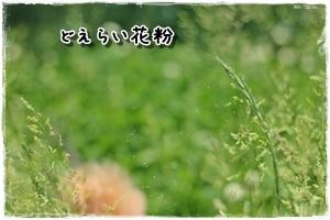 20120528-082.jpg