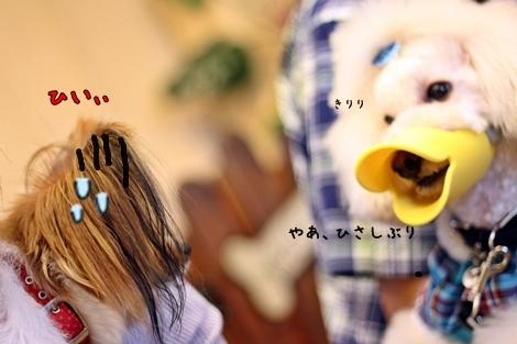 20120910-123.jpg
