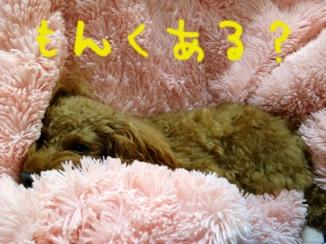 fc2blog_20121106234527922[1]