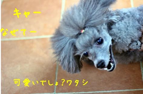 245-20121105-214505.jpg
