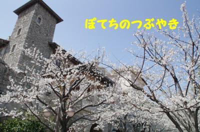 20120405 桜
