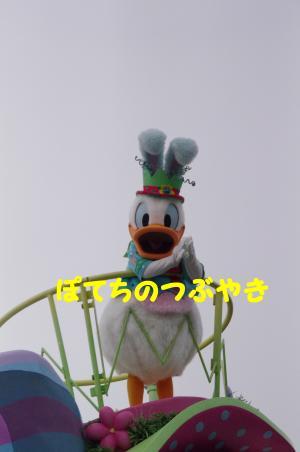 20120429 ドナルド