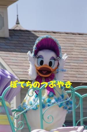 20120429 デイジー