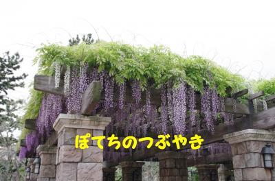 20120504 藤