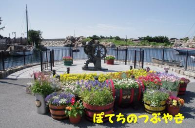 20120513 お花