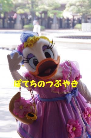 20120527 デイジー