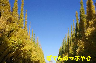 20121125 銀杏並木