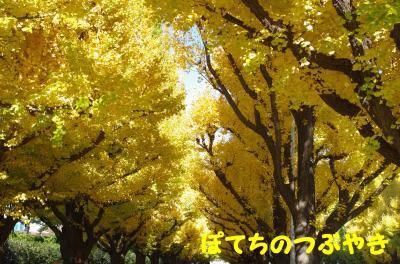 20121125 銀杏並木1