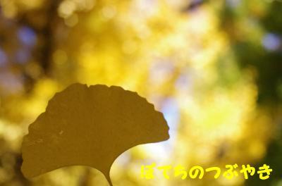 20121125 銀杏並木2