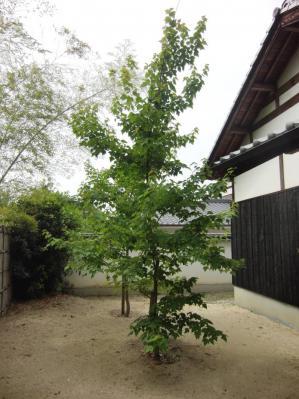 ③木堂の生家6