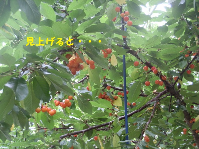P7060683 - コピー