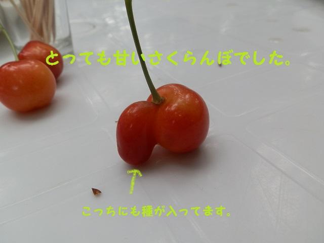 P7060684 - コピー
