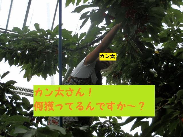 P7060687 - コピー