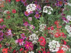 トルコのお花畑