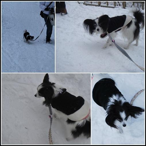 雪の上を歩くルビー