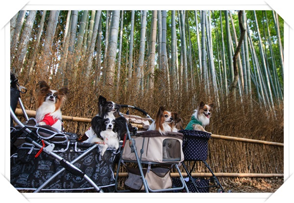 竹林で集合写真