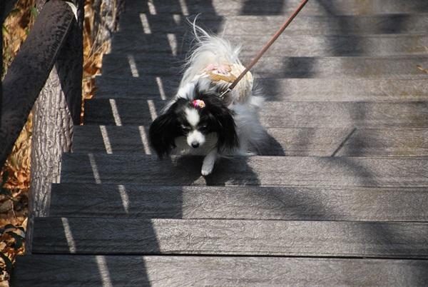 階段を下りるルビー