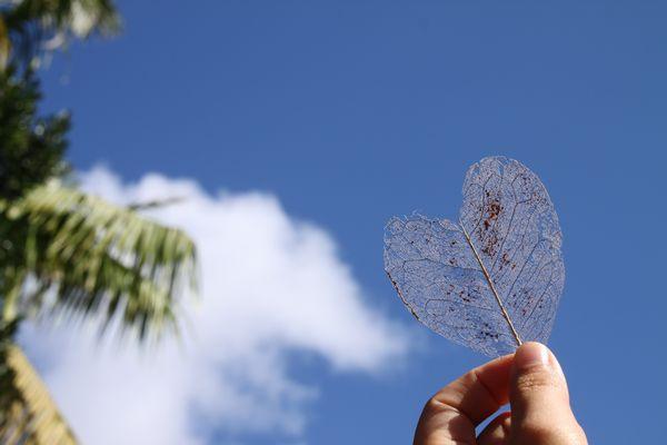 ハート形の落葉
