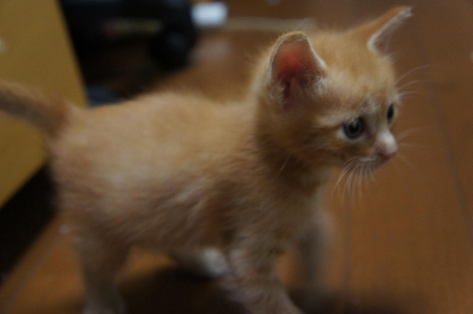 cat-DSC00175_convert.jpg