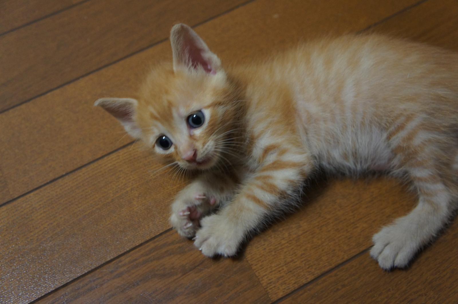 cat-DSC00185_convert.jpg