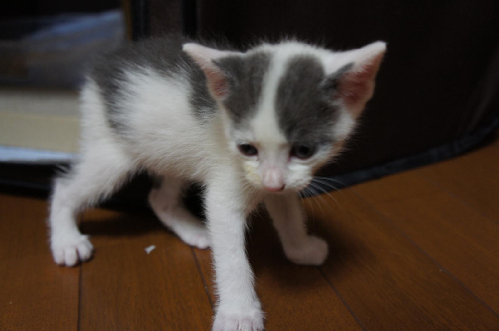 cat-DSC00193_convert.jpg