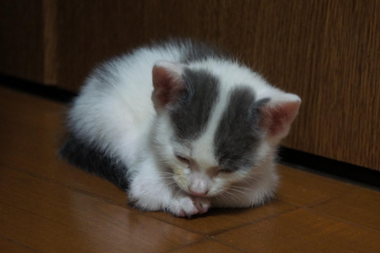 cat-DSC00194_convert.jpg