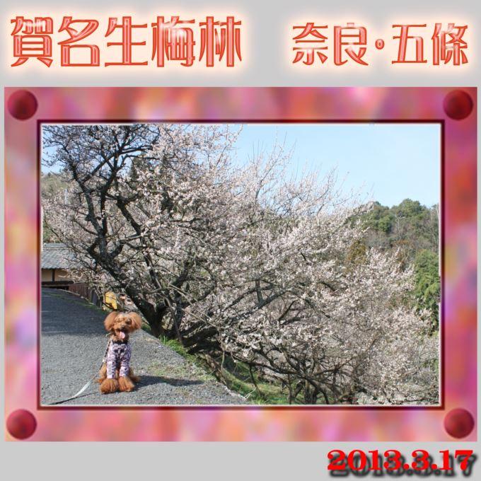 52_20130326231613.jpg