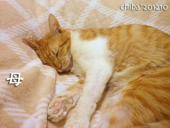 chiba12-10-107.jpg