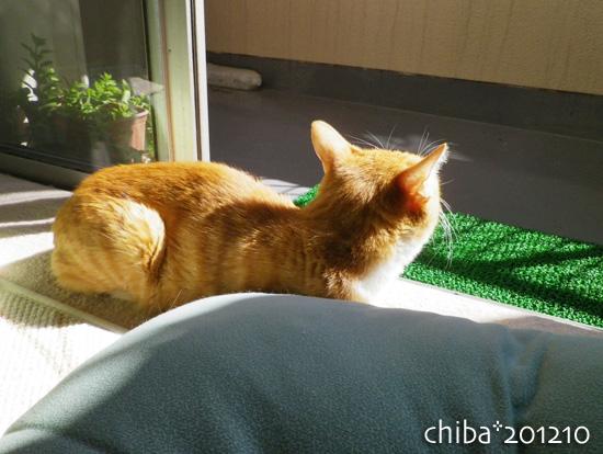 chiba12-10-108.jpg