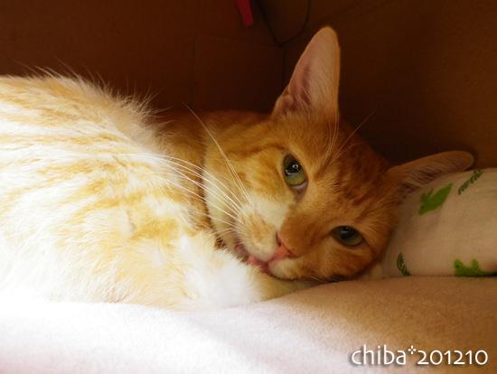 chiba12-10-112.jpg