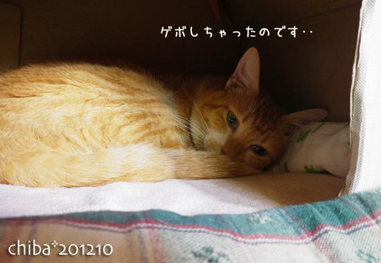chiba12-10-113.jpg
