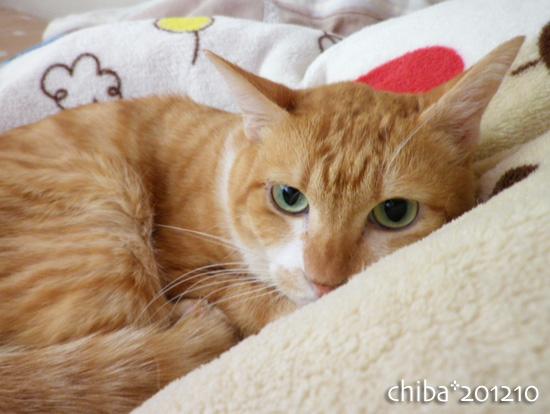 chiba12-10-123.jpg