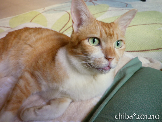 chiba12-10-13.jpg