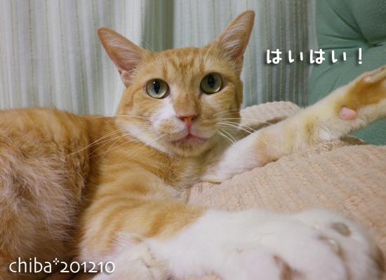 chiba12-10-24.jpg